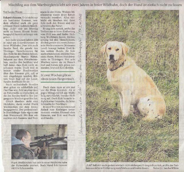 Streunender Labrador Ecki entkam dem Betäubungspfeil - TA v. 5.11.2013 Kompl._01 - kl.