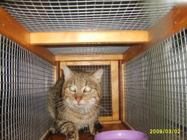 Katze in Falle v. 02.03.2009