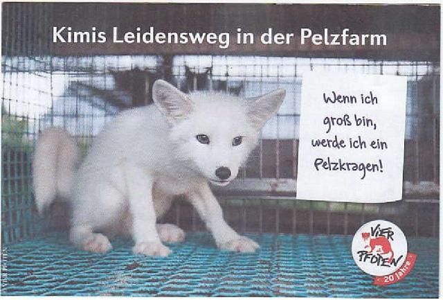kimis-leidensweg-in-der-pelzfarm-vier-pfoten-nov-2014-001-kl