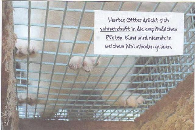 kimis-leidensweg-in-der-pelzfarm-vier-pfoten-nov-2014-002-kl