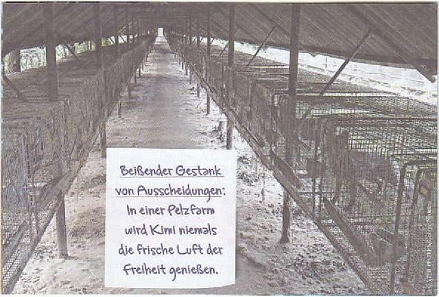 kimis-leidensweg-in-der-pelzfarm-vier-pfoten-nov-2014-003-kl